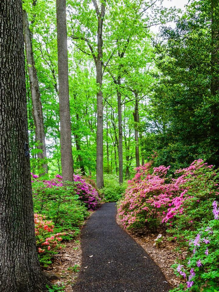 滨州詹金斯植物园(Jenkins Arboretum),花丛漫步_图1-12