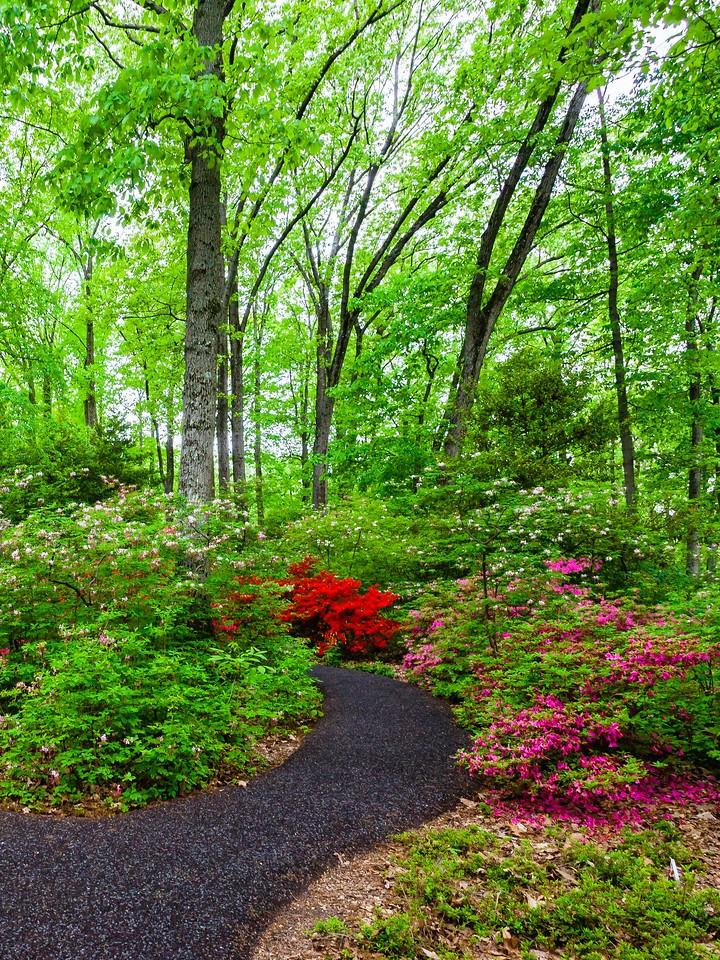 滨州詹金斯植物园(Jenkins Arboretum),花丛漫步_图1-13