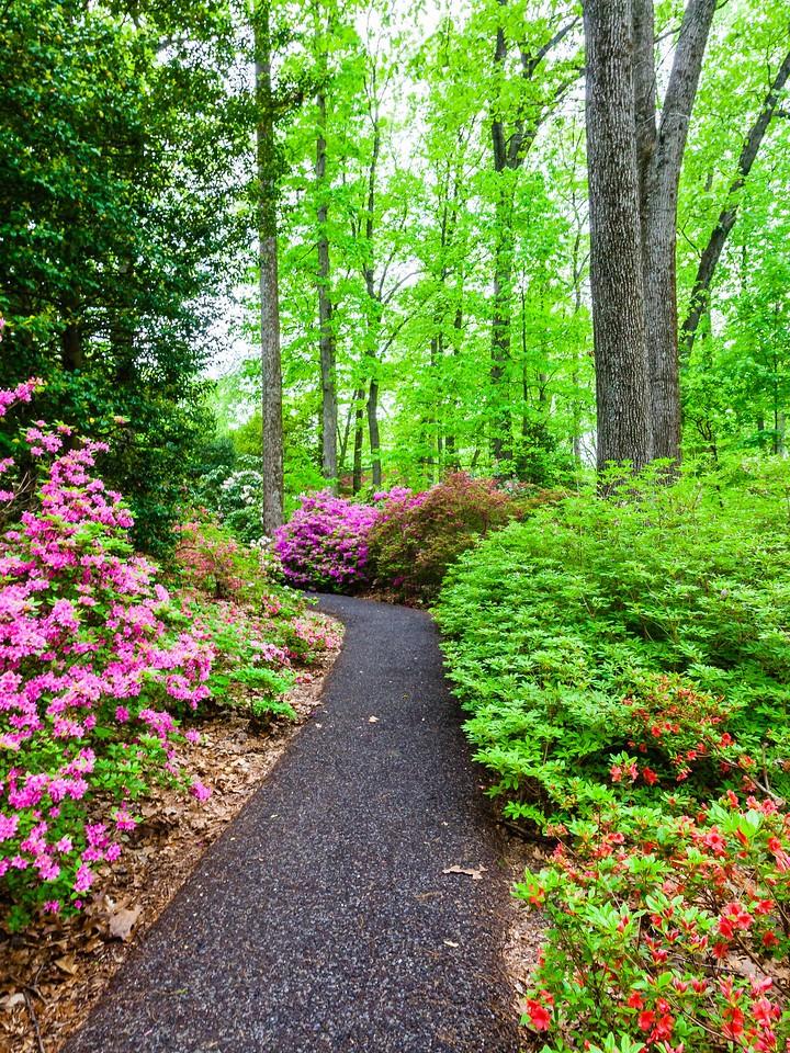 滨州詹金斯植物园(Jenkins Arboretum),花丛漫步_图1-14