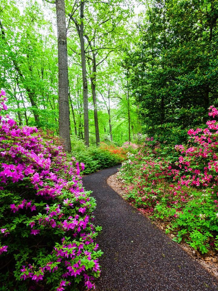 滨州詹金斯植物园(Jenkins Arboretum),花丛漫步_图1-16