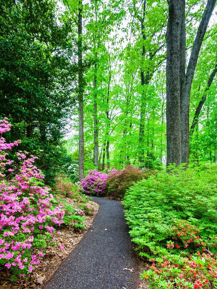 滨州詹金斯植物园(Jenkins Arboretum),花丛漫步_图1-17