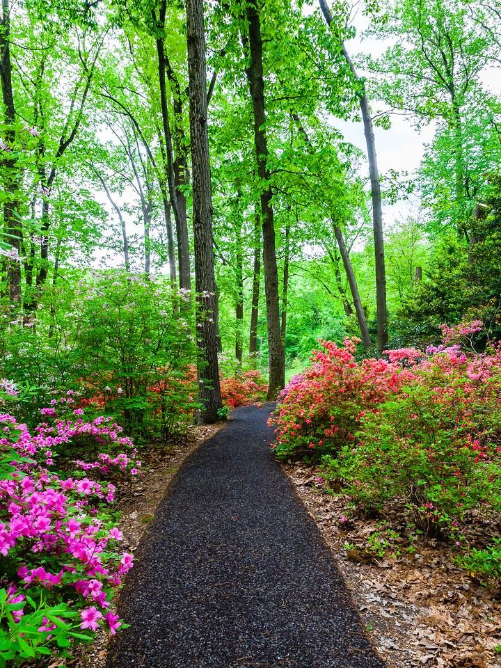 滨州詹金斯植物园(Jenkins Arboretum),花丛漫步_图1-18