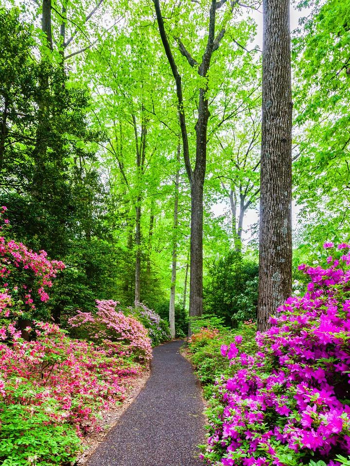 滨州詹金斯植物园(Jenkins Arboretum),花丛漫步_图1-19