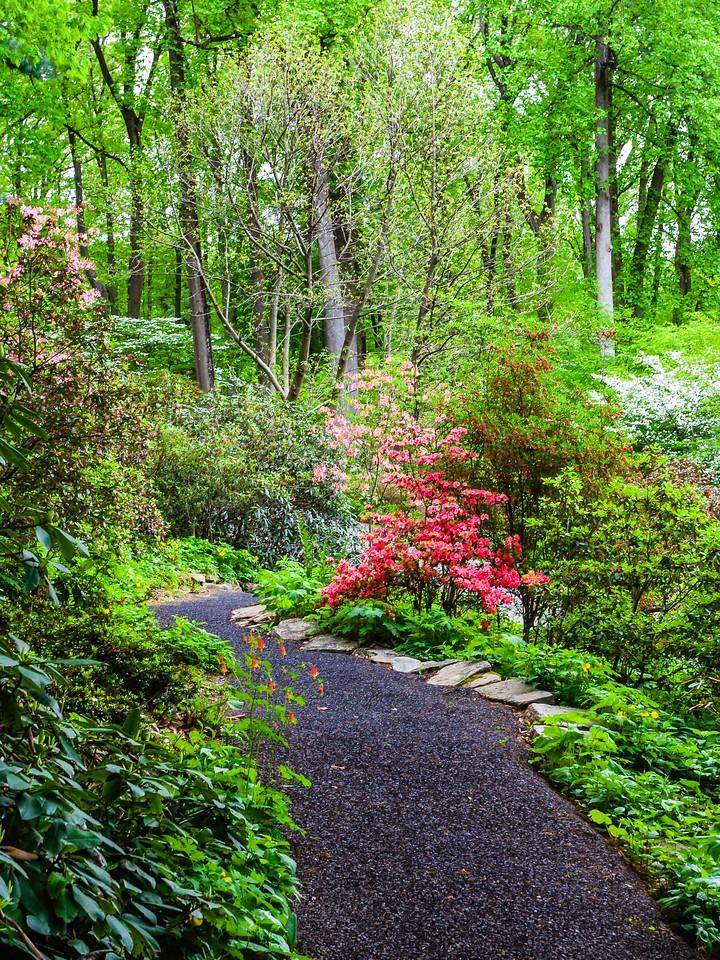 滨州詹金斯植物园(Jenkins Arboretum),花丛漫步_图1-20