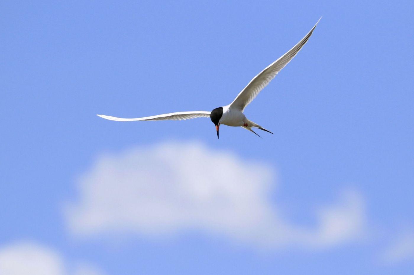 燕鸥捕鱼_图1-1