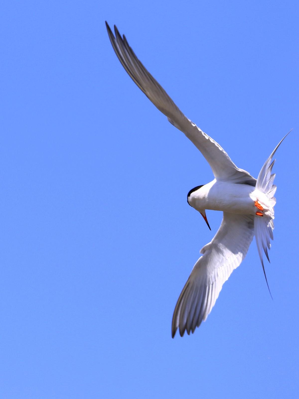 燕鸥捕鱼_图1-3