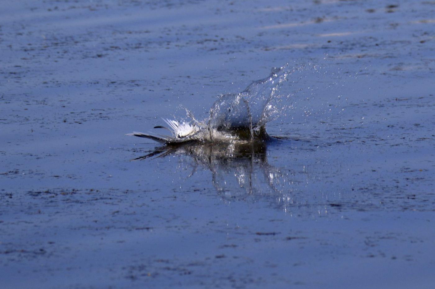 燕鸥捕鱼_图1-5