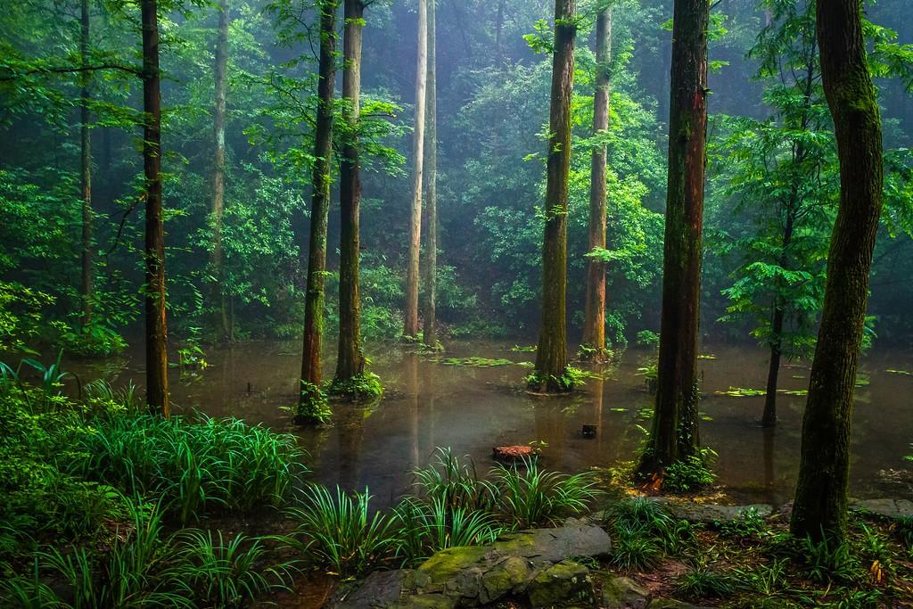 杭州虎跑,一处幽静传奇的景点_图1-10