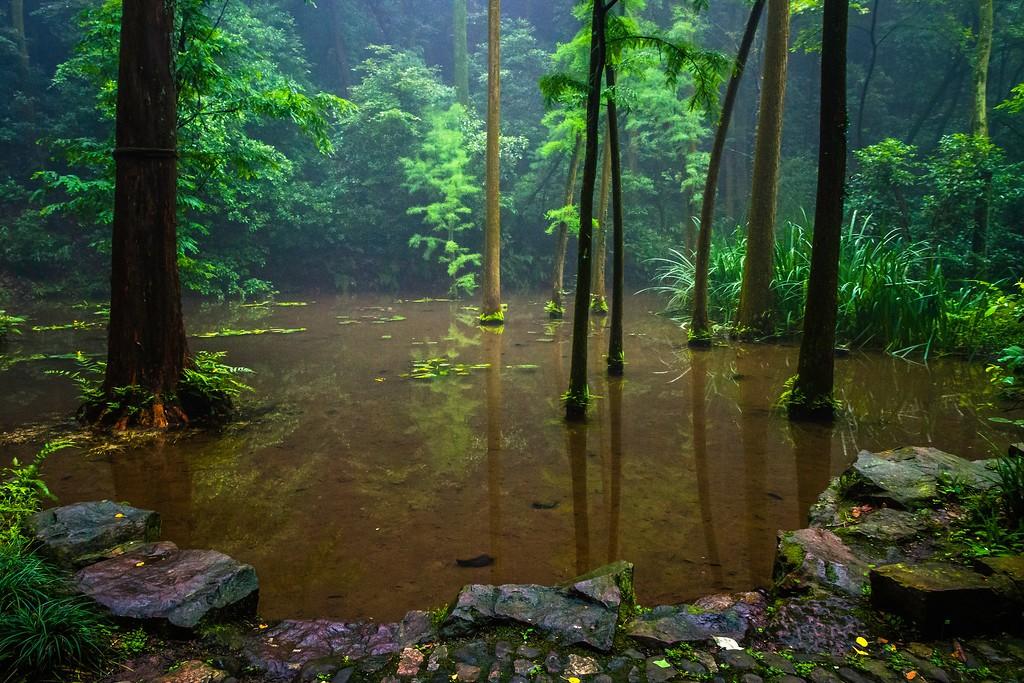 杭州虎跑,一处幽静传奇的景点_图1-12