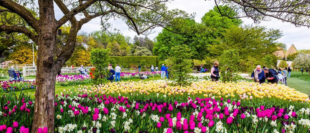 宾州长木公园,春风吹开郁金香_图1-5