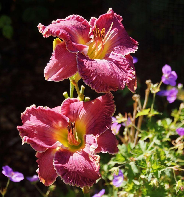 花卉日记-41_图1-2