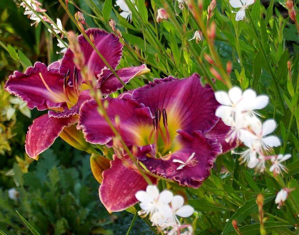 花卉日记-41_图1-6