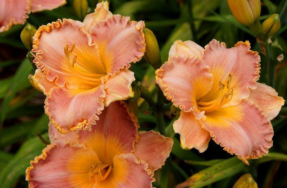 花卉日记-41_图1-7