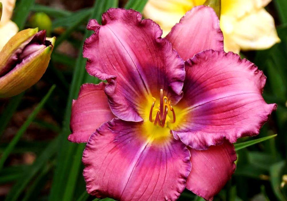 花卉日记-41_图1-8