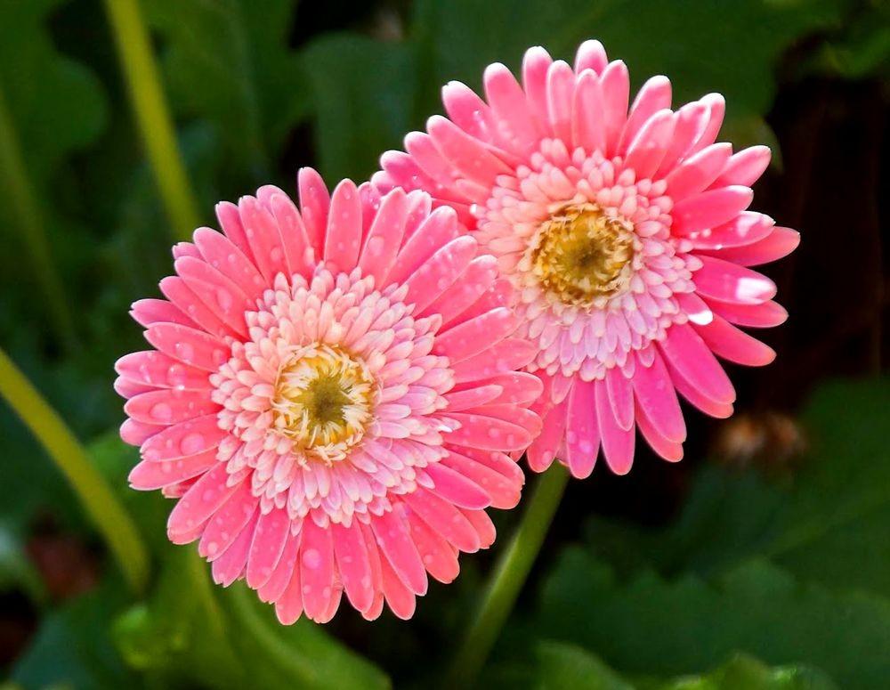 花卉日记-41_图1-13