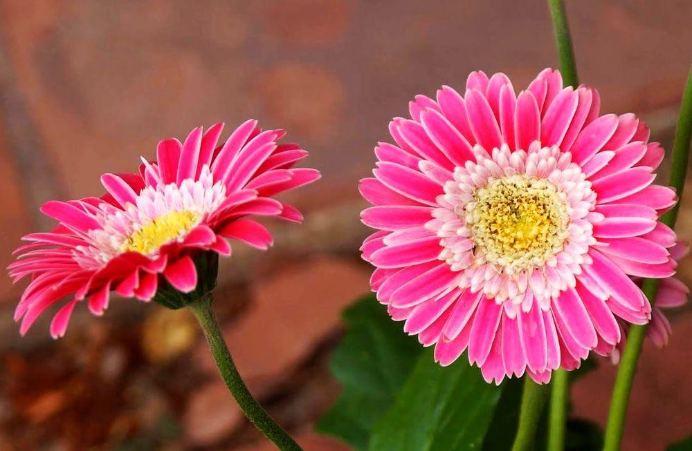 花卉日记-41_图1-14