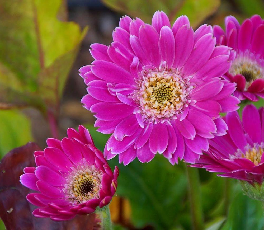 花卉日记-41_图1-15