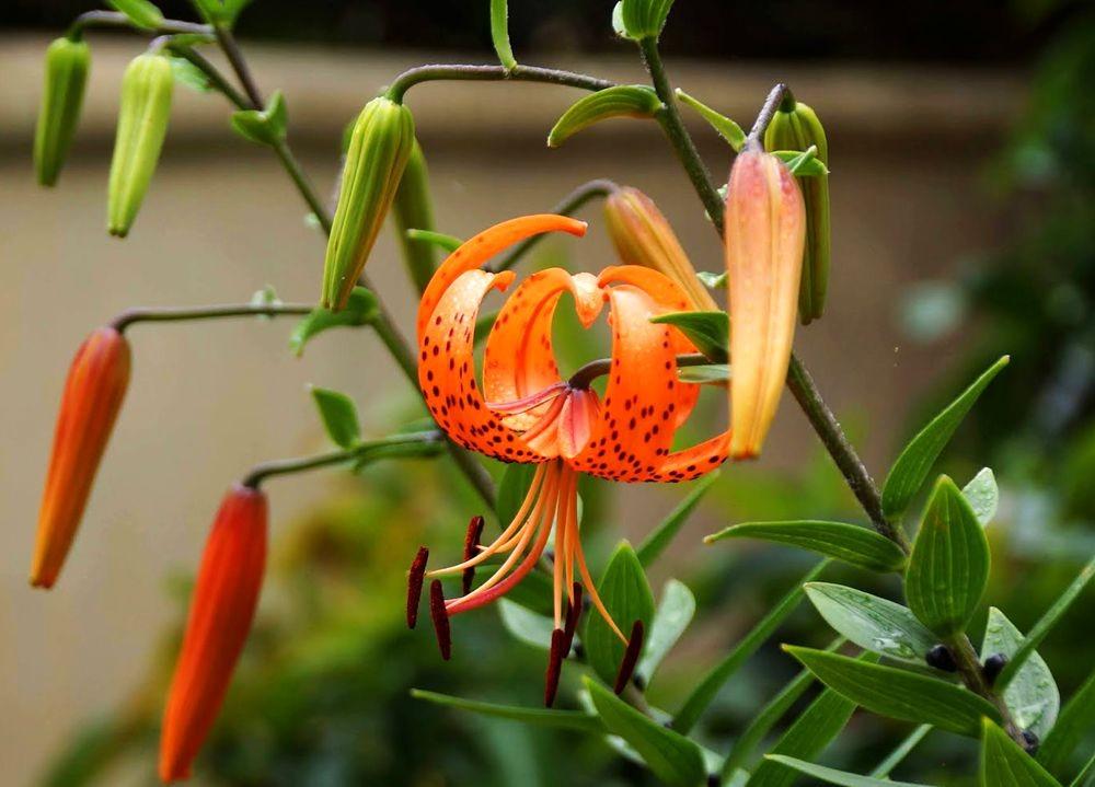 花卉日记-41_图1-17