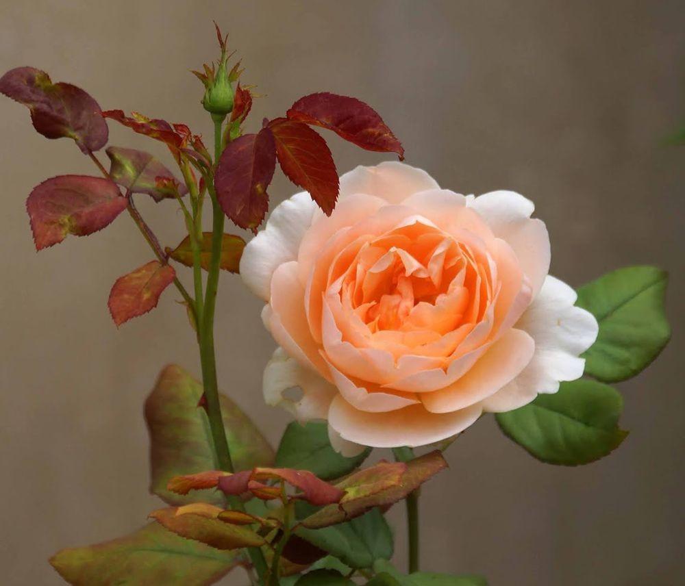 花卉日记-41_图1-19
