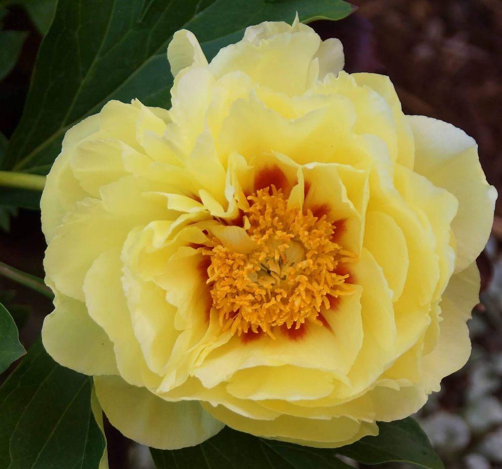 花卉日记-41_图1-20