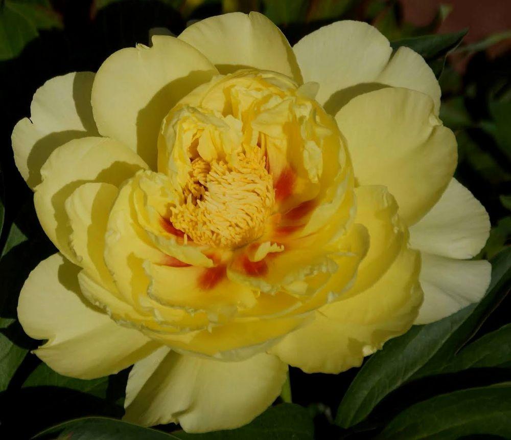 花卉日记-41_图1-21