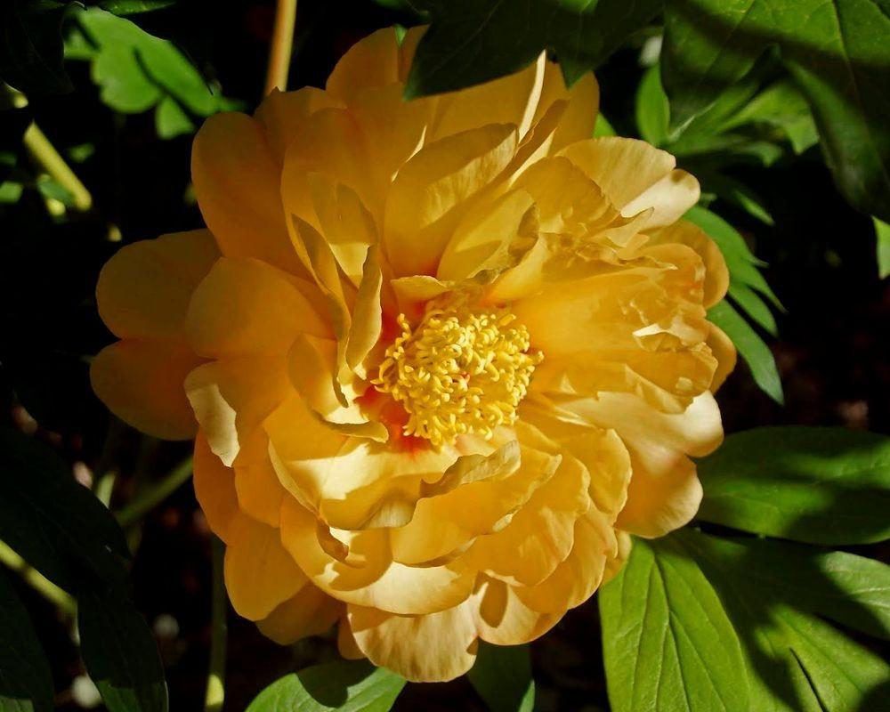 花卉日记-41_图1-22