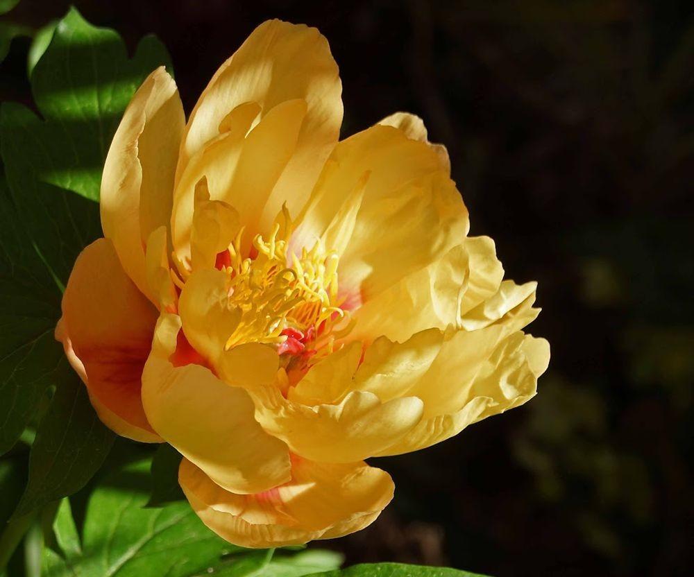 花卉日记-41_图1-23