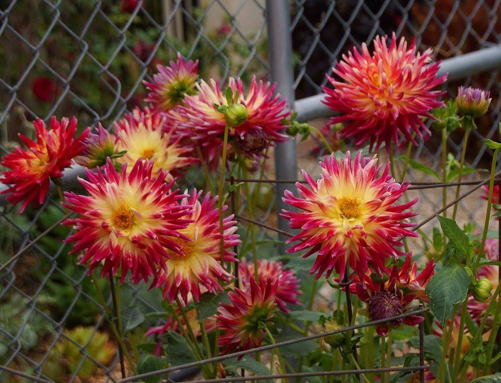 花卉日记-42_图1-2