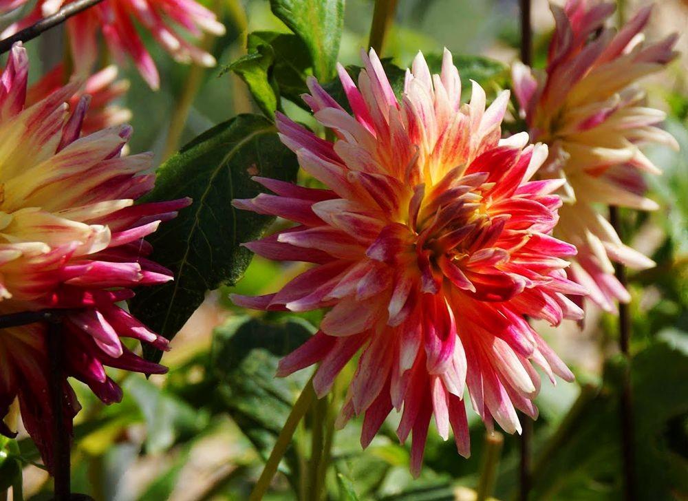 花卉日记-42_图1-3