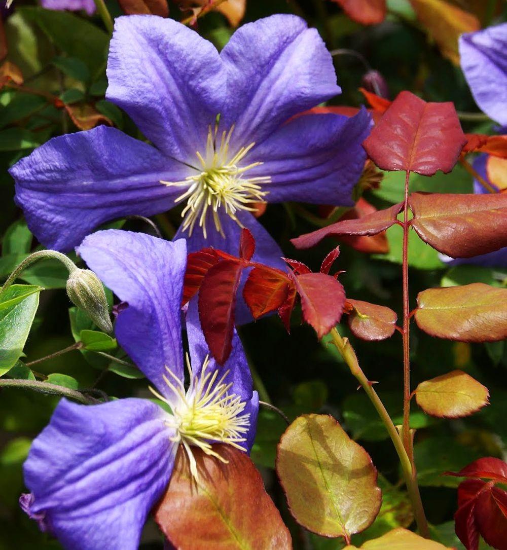 花卉日记-42_图1-4