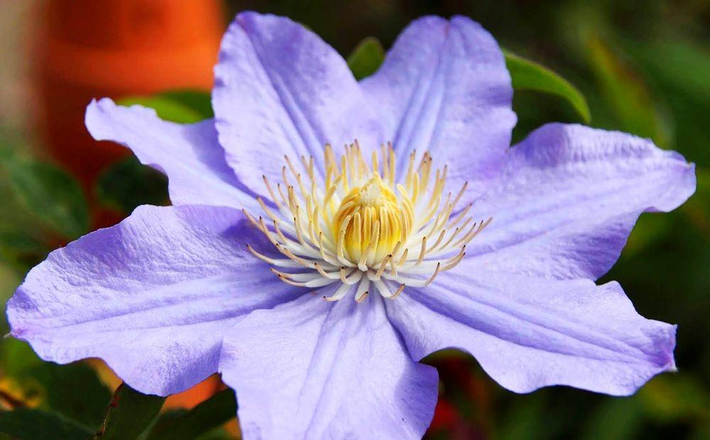 花卉日记-42_图1-6