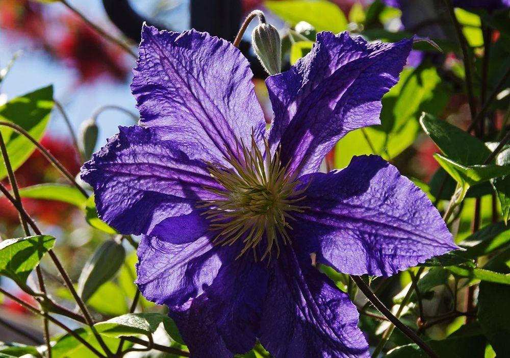 花卉日记-42_图1-7