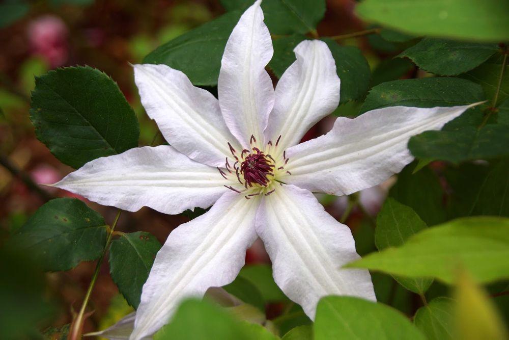 花卉日记-42_图1-8