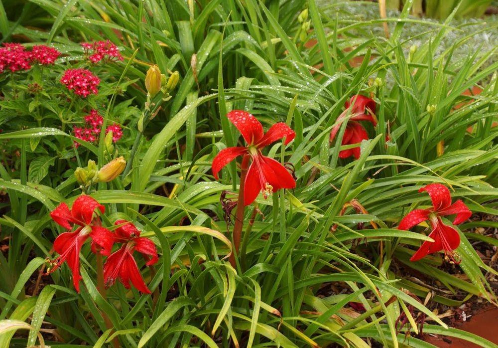 花卉日记-42_图1-10