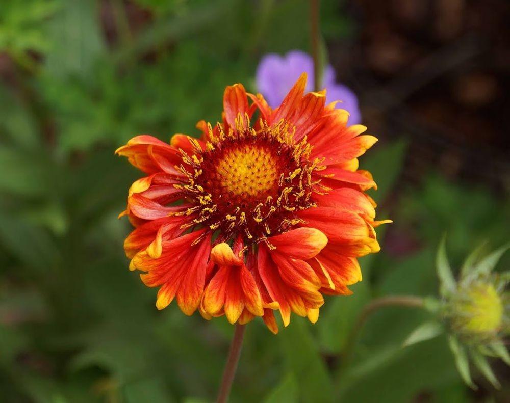 花卉日记-42_图1-12