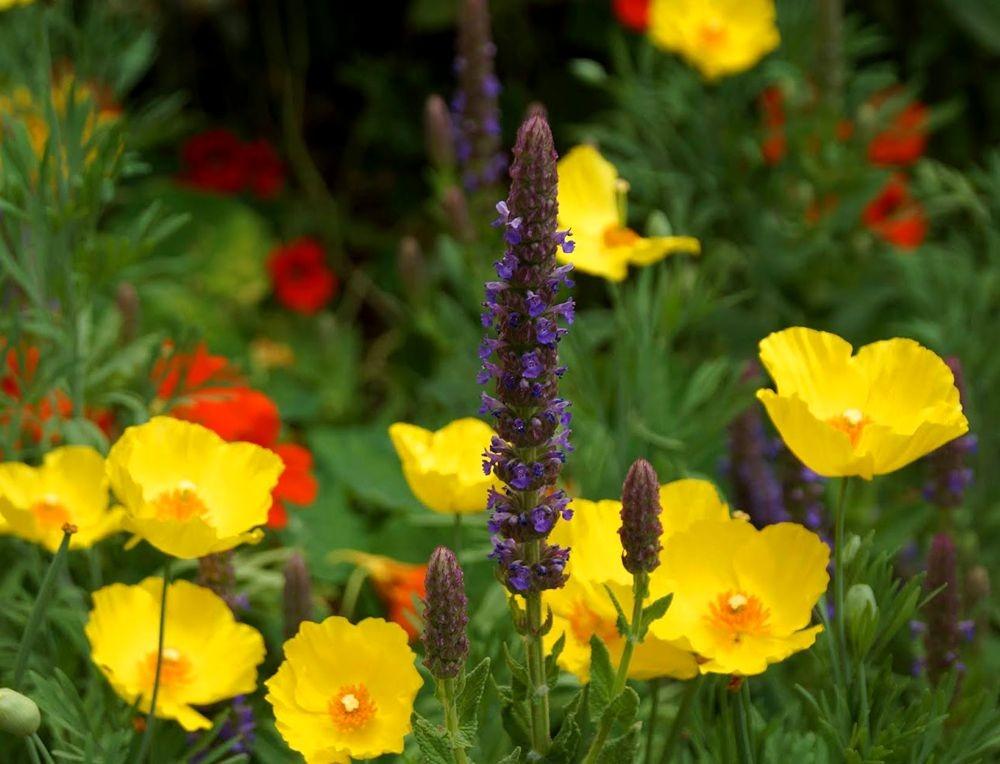 花卉日记-42_图1-17