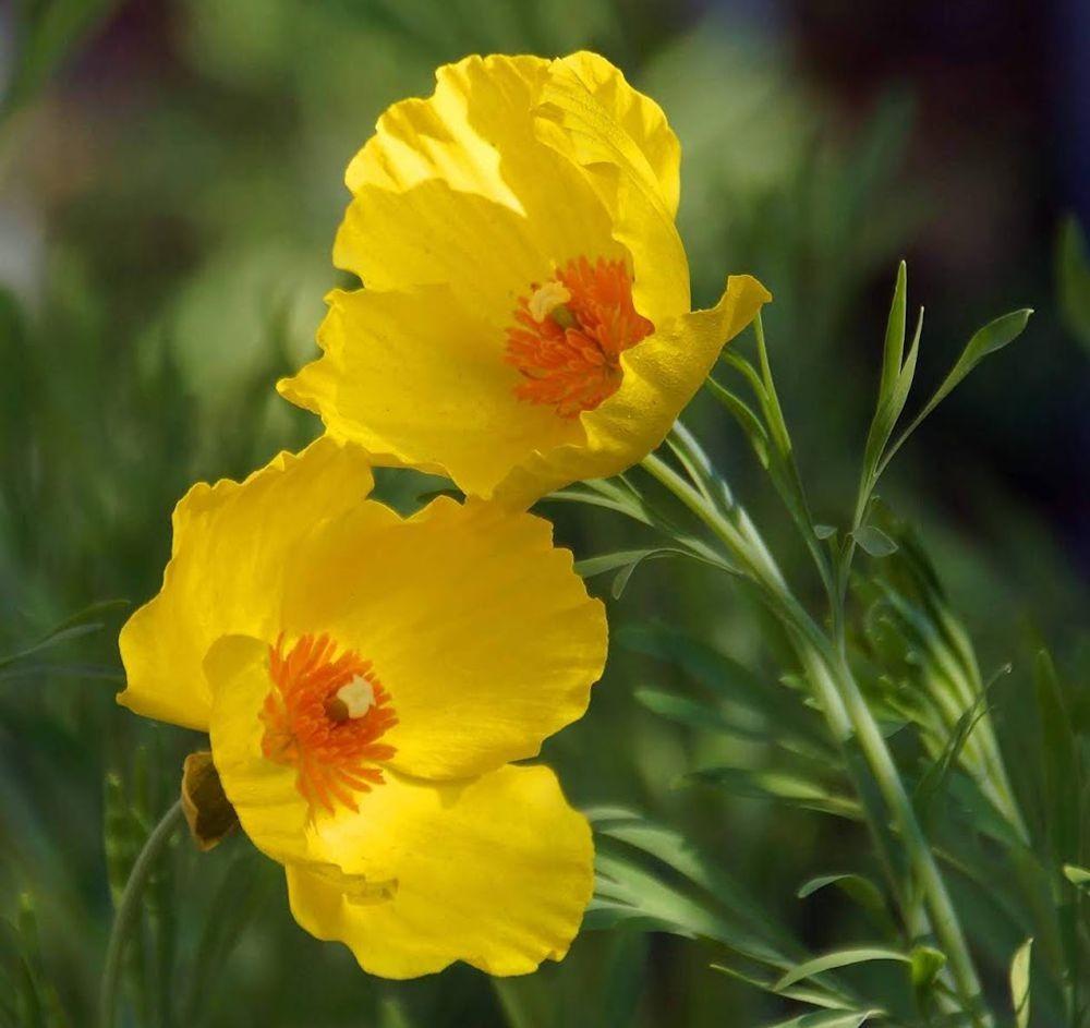 花卉日记-42_图1-18