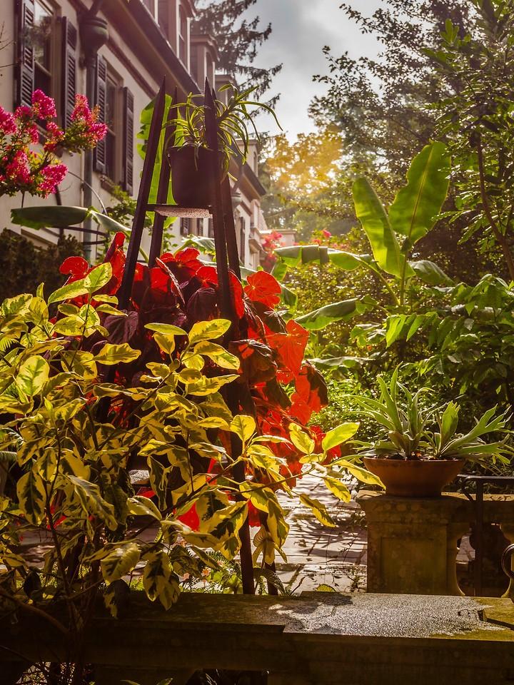 Chanticleer花园,鲜花处处开_图1-3