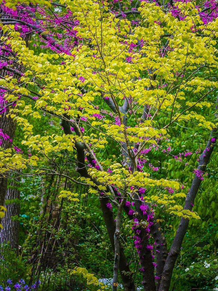 Chanticleer花园,鲜花处处开_图1-8