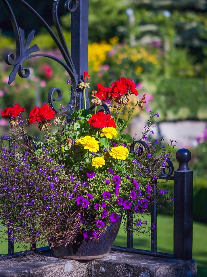 Chanticleer花园,鲜花处处开_图1-4