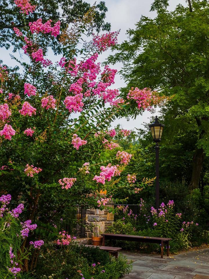 Chanticleer花园,鲜花处处开_图1-2