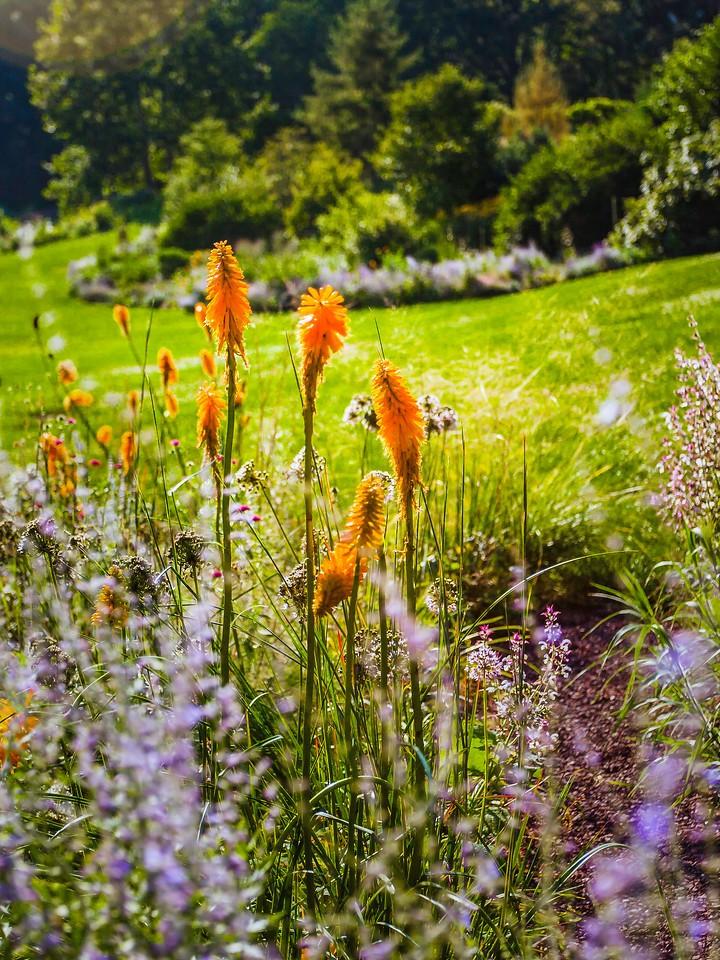 Chanticleer花园,鲜花处处开_图1-7