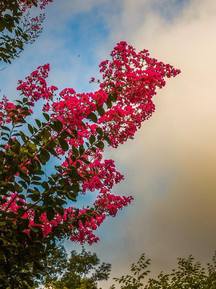 Chanticleer花园,鲜花处处开_图1-6