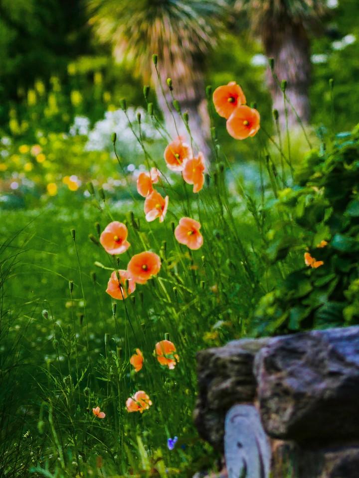 Chanticleer花园,鲜花处处开_图1-9