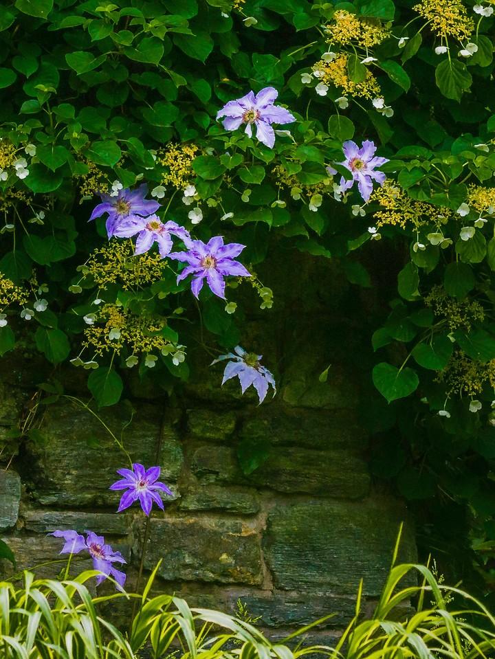 Chanticleer花园,鲜花处处开_图1-10