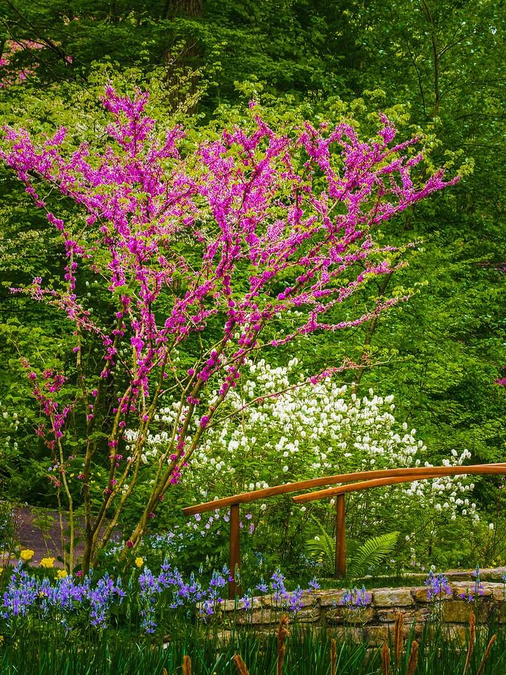 Chanticleer花园,鲜花处处开_图1-11