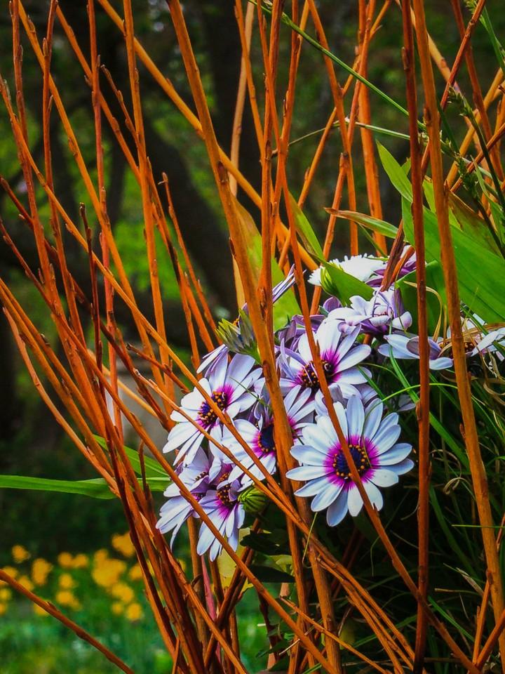 Chanticleer花园,鲜花处处开_图1-12