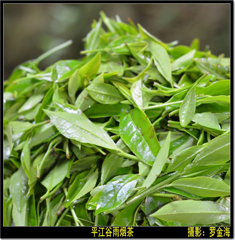 平江烟茶赋(古典诗词)_图1-2