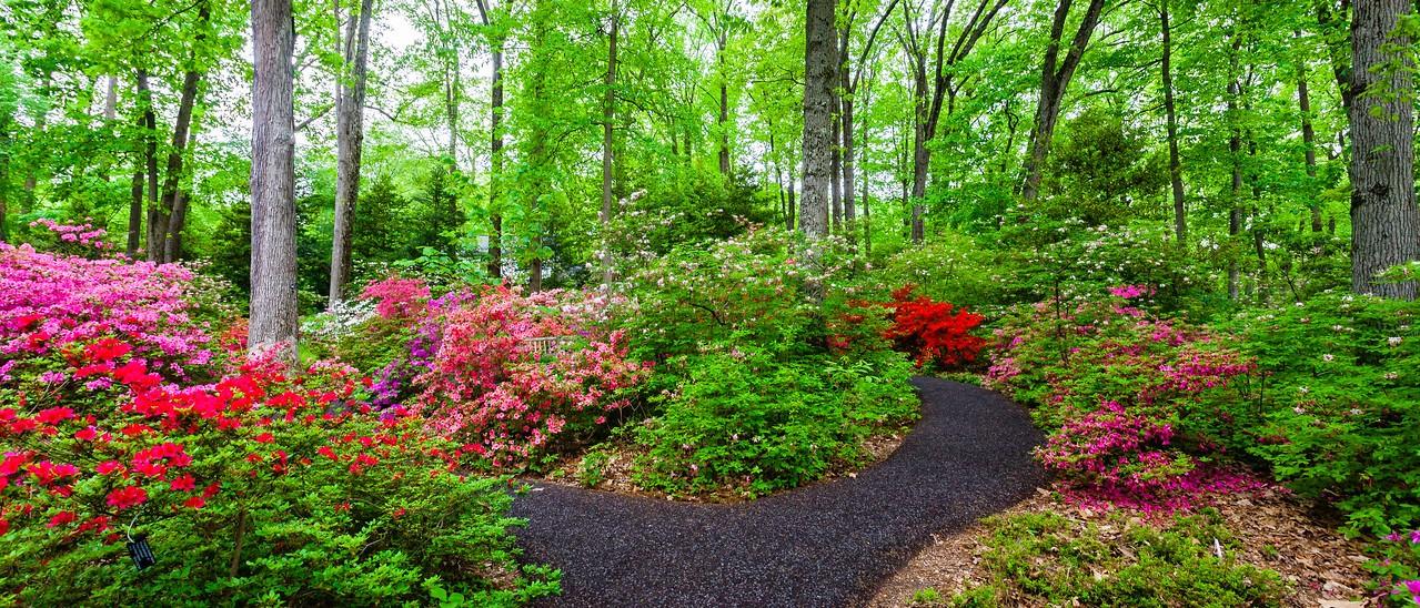 滨州詹金斯植物园(Jenkins Arboretum),杜鹃花开满园_图1-7