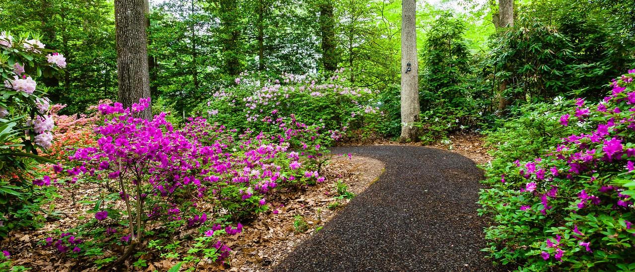 滨州詹金斯植物园(Jenkins Arboretum),杜鹃花开满园_图1-11